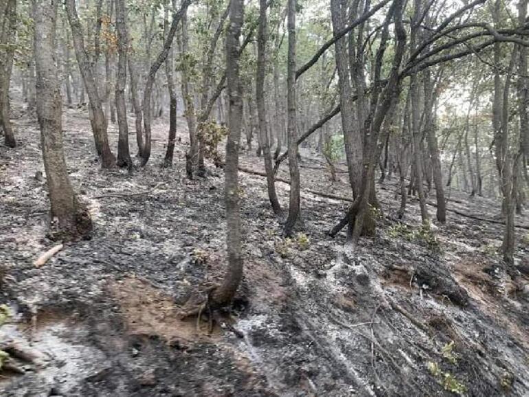 OGM son durumu açıkladı: Tuncelide tek noktada yangın sürüyor
